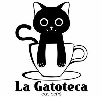 Café de gatos Gatoteca